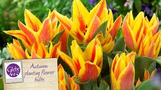 In this video Pete talks about our 2015 range of autumn planting bulbs for fantastic colour in the spring.Visit http://www.glebegardencentre.co.ukLike us on Facebook - http://www.facebook.com/glebegcFollow us on Twitter - http://www.twitter.com/glebegc