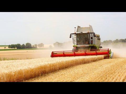 Erntezeit in Rheinhessen: Zwei Wochen harte Arbeit bei Weizen- und Gerstenernte