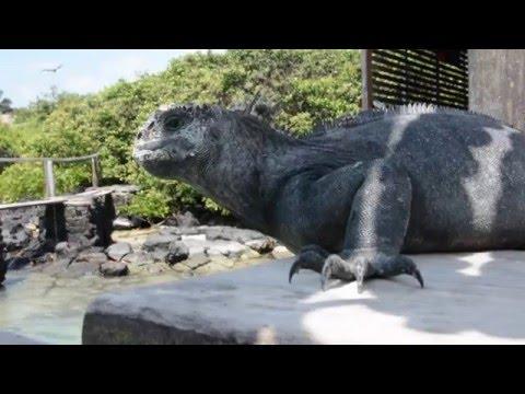 Galapagos Expeditions 2016