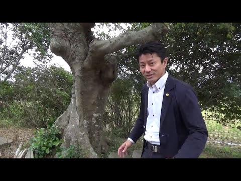 エノキ 大きな木 メインツリー Takezo・ファーム オリンピック