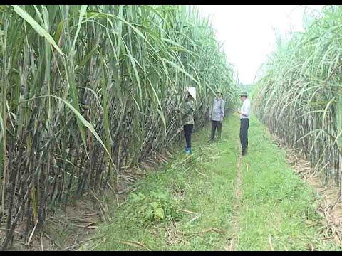 Đẩy mạnh XTTM cho ngành nông sản mía đường Việt Nam