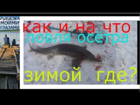 Волга осетр поймать фотка