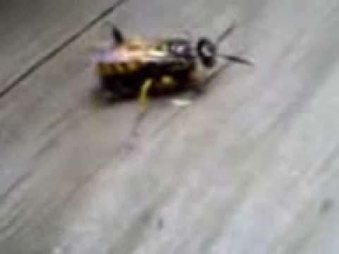 Секс с пчеловодом видео фраза