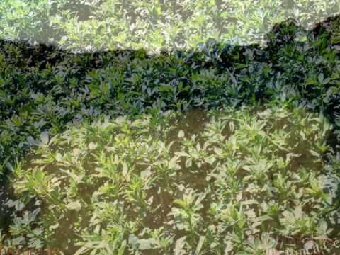 El terreno ideal para el cultivo de alfalfa