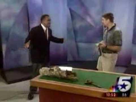 dinosaur neil terrorizes newscaster