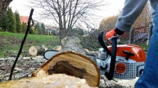 2. Another bucking with STIHL MS 291.