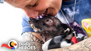Woman Keeps Rescuing All The Dogs No One Else Wants | The Dodo Heroes by The Dodo