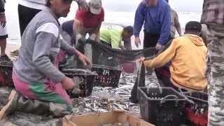 Espinho Portugal  city photo : Espinho Portugal: Fishing for a living, pescadores e ospeixeiros de Espinho