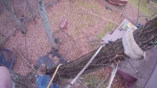 7. Rigging limbs over house. Stihl ms193t