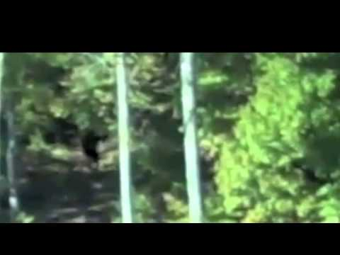 Amazing Video!! Kid Caught Bigfoot on Cam!