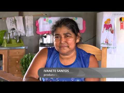 A produção do açaí em Anori no Amazonas e estrada que vai ligar a cidade de Codajás