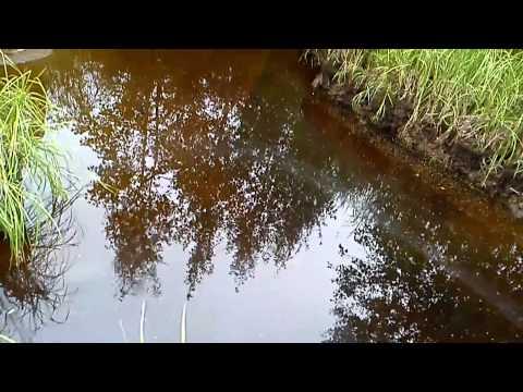 ловля рыбы в ручейках