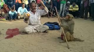 Video Madaari Bandar aur bandariya ka naach-AWESOME the monkeys  SHOW WITH MADARI MADARI ,Monkey Monkey MP3, 3GP, MP4, WEBM, AVI, FLV Mei 2017