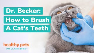 Brushing Your Cat's Teeth
