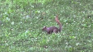 Petit souvenir des écureuils de Central Park et d'ailleurs à New York City