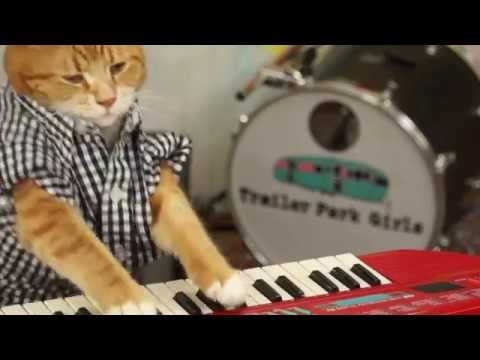 Talented Cat Plays Keyboard Better Than Anyone Else
