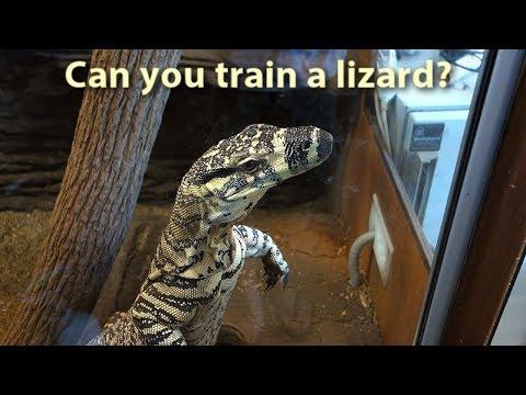 Man trains his lizards.