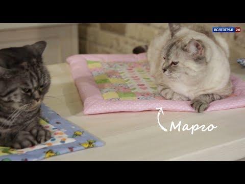 Одеяло для котиков. Выпуск от 29.10.2018