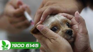 Chăn nuôi chó | Chó đi ngoài ra máu, bỏ ăn bỏ uống: Cứu ngay kẻo muộn