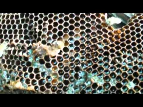 RUDEC – beekeeping in Cameroon