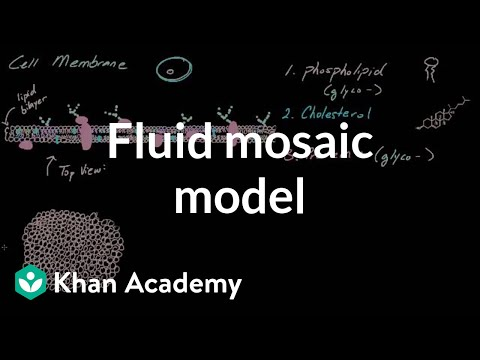 cell membrane overview and fluid mosaic model video