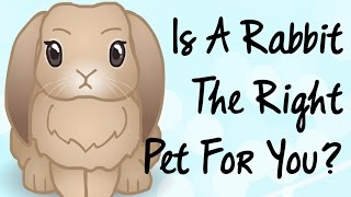BudgetBunny: Is A Rabbit The Right Pet For You?