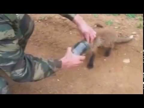 Hombre libera a zorro bebé atascado en jarra de vidrio