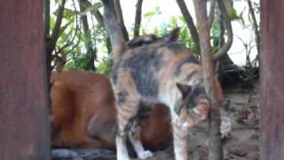 Кошка и антилопа