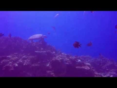 Diving Boracay ( Friday's Rock )