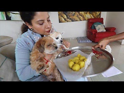 My DOGS Celebrating Rakshabandhan | Ss Vlogs :-)
