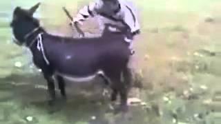 Videos Para Whatsapp - 31