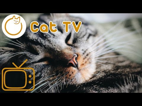 CAT TV! The best cat entertainment video to cure boredom! 2018