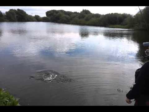 szczupak z małego jeziorka