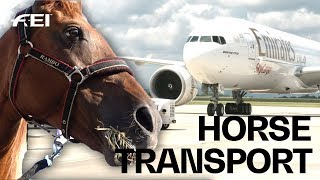How the horses travel to the FEI World Equestrian Games™ |Tryon 2018