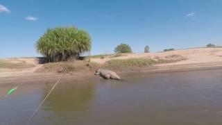 Video Giant Crocodile Scares Fishermen in Western Australia MP3, 3GP, MP4, WEBM, AVI, FLV Juli 2018