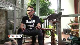 Download Video Uya Kuya Bengal Cat MP3 3GP MP4