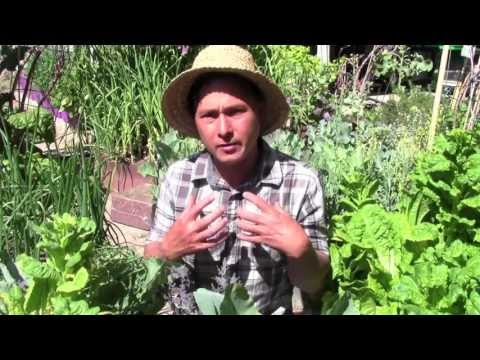 gardening - John from http://www.growingyourgreens.com/ answers the question: Do you need to purchase anything to grow your own food at home? In addition, John will shar...