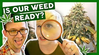 WHEN IS WEED READY TO HARVEST? – First Time Growing Weed at Home: Weeks 10 & 12 by That High Couple