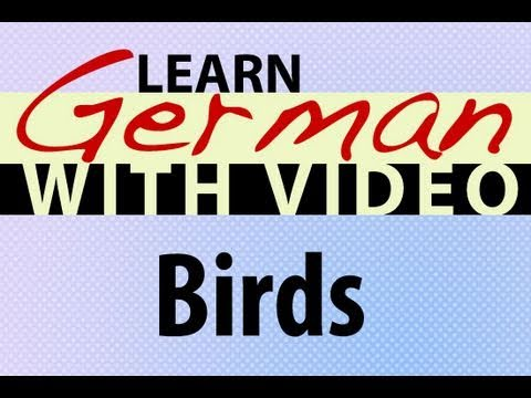 Learn German with Video – Birds