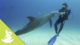In Shark Bay, Australia, it has become a habit for wild dolphins to approach the shore to socialize with human visitors. These encounters go so far back, that aborigines created a legend in which it was believed that human beings are descendant from dolphins.SUBSCRIBE and discover shocking scenes and the most amazing videos: http://goo.gl/fC5pjCFollow us in:Facebook: https://www.facebook.com/NewAtlantisD...Twitter: https://twitter.com/NewAtlantisDocu