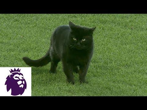 Video: Black cat wanders around pitch at Goodison Park   Premier League   NBC Sports