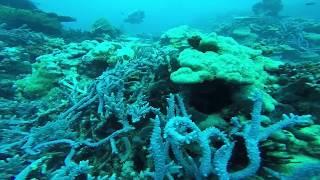 Vanuatu Coral
