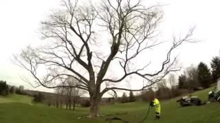 Prolonging Enjoyment of High Value Trees