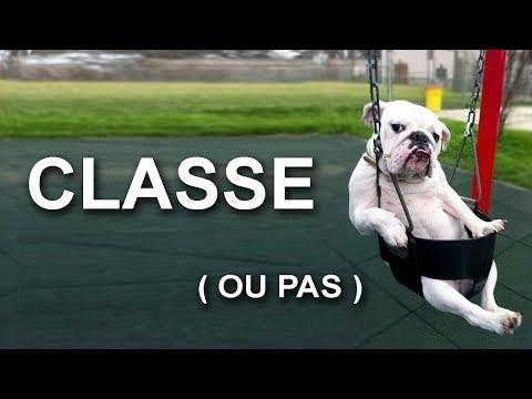 CLASSE PAS CLASSE - PAROLE DE CHAT