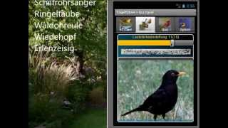 Bird Guide + Quiz Game YouTube video