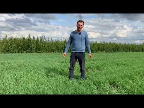 Саженцы В Питомнике Школьный Сад 2019г