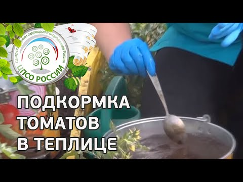 Подкормка томата. Чем удобрять помидоры.