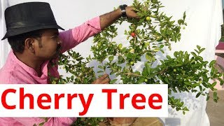 Nonton How To Grow Cherry Tree  Film Subtitle Indonesia Streaming Movie Download