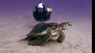 Video Imperdível do Aloha Divers - Mergulho em Okinawa
