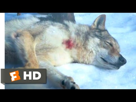 Alpha (2018) - Man's Best Friend Scene (9/10) | Movieclips
